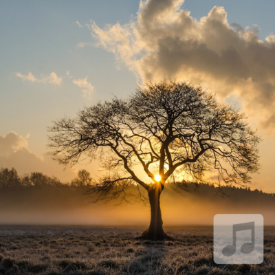 Elder Tree | Theta Wave Binaural Beats Music | Deep Relaxation, Therapeutic