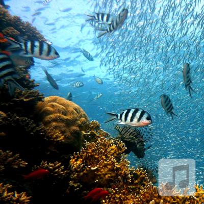 Mermaid Lagoon | Relaxing Music for Children