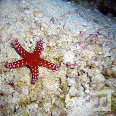 Starfish Relaxation | Alpha Wave Binaural Beats Music