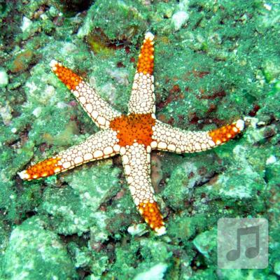 Starfish Relaxation | Theta Wave | Meditation Music