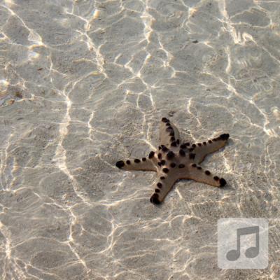 Starfish Relaxation | Gamma Wave | Meditation Music