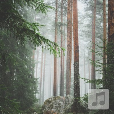 Storybook Forest | Peaceful, Relaxing Background Soundscape