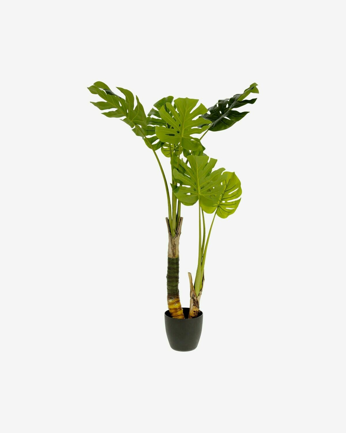Planta artificial Monstera con maceta de cemento negro 130 cm