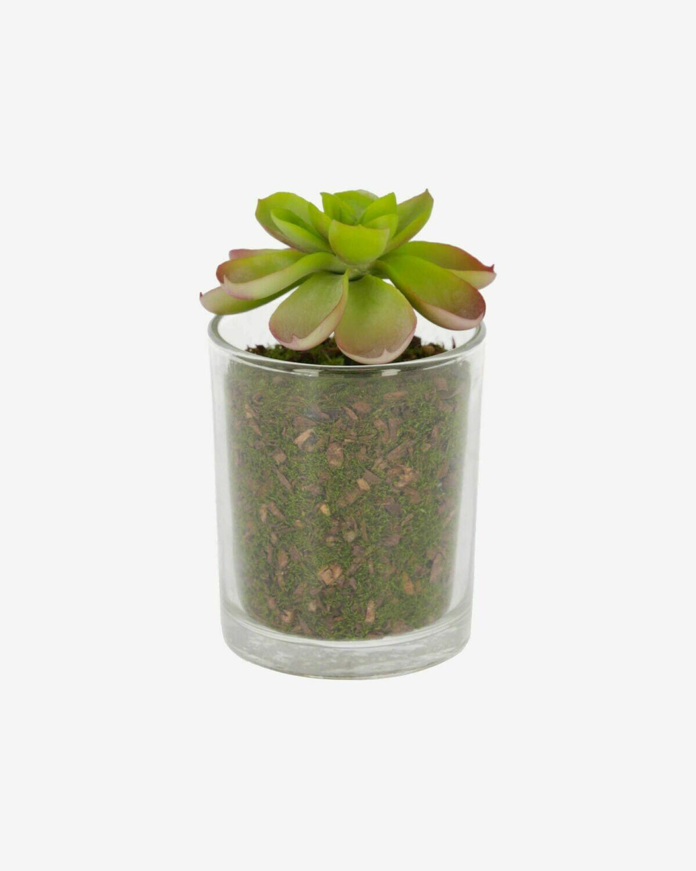 Planta artificial Aeonio con maceta de cristal 11 cm