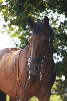 Cavesson / Bridle