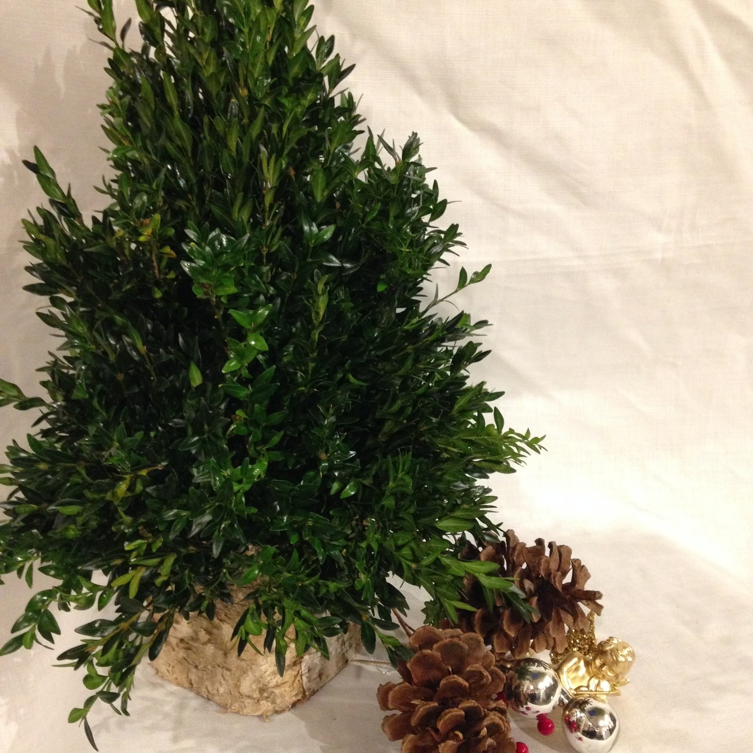 """Build Your Own Boxwood Tree"" by Twigs Florist"