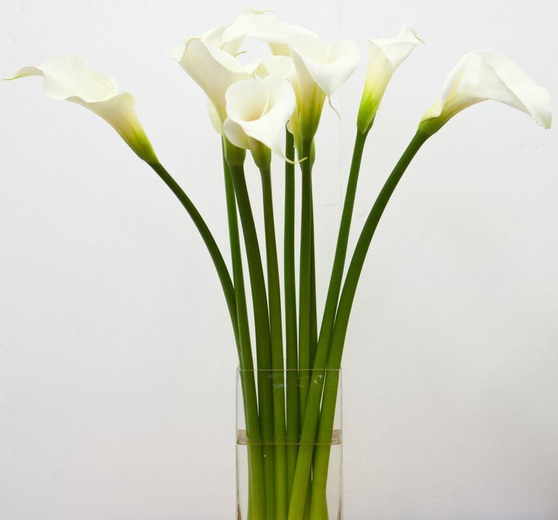Callas by Twigs Florist