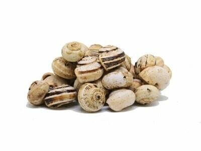 1 kg Lumachine (babbaluci,babbaluceddi, bovoli, theba pisana)