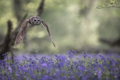 I'll wait for you in the bluebells