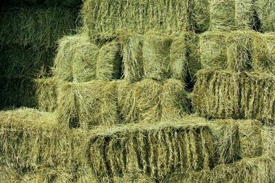 Clover/Timothy mix hay bale