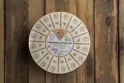 Formaggio Latteria affinato nelle vinacce di cabernet 550 g circa stagionato 6 mesi