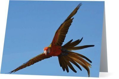 Parrots Take Flight II (horizontal)