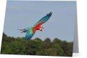Parrots Take Flight III (horizontal)