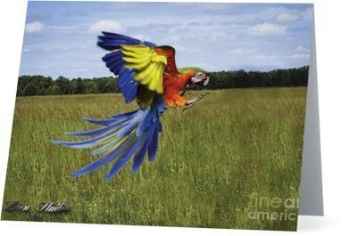 Freeflying Parrots Set of 6 cards