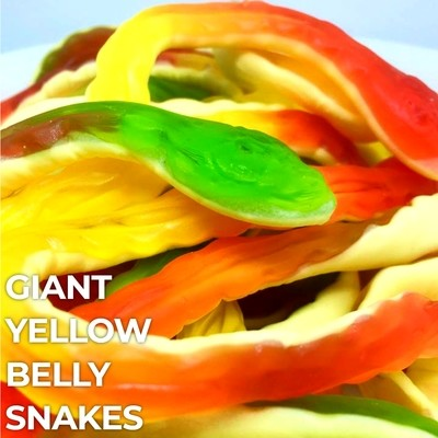 Giant Yellow Belly Snakes