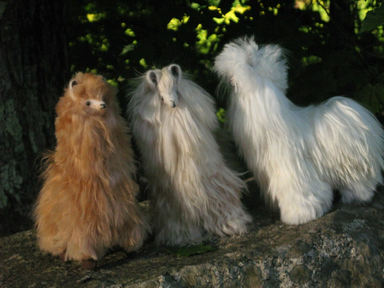 Standing Suri Alpaca - 12