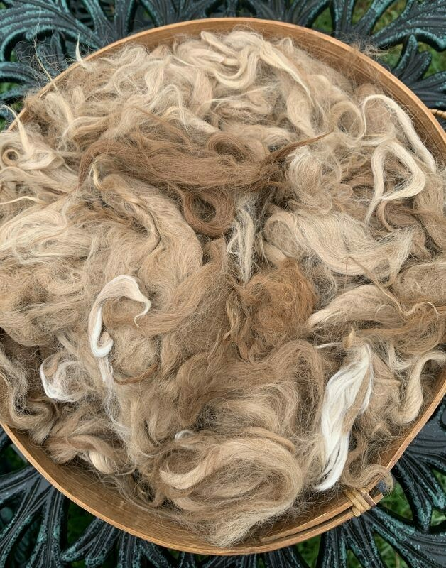 Suri Alpaca Fiber, 4 Inches, Light Fawn, Brown, Beige,