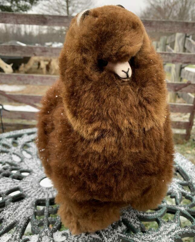 Standing Alpaca - 12