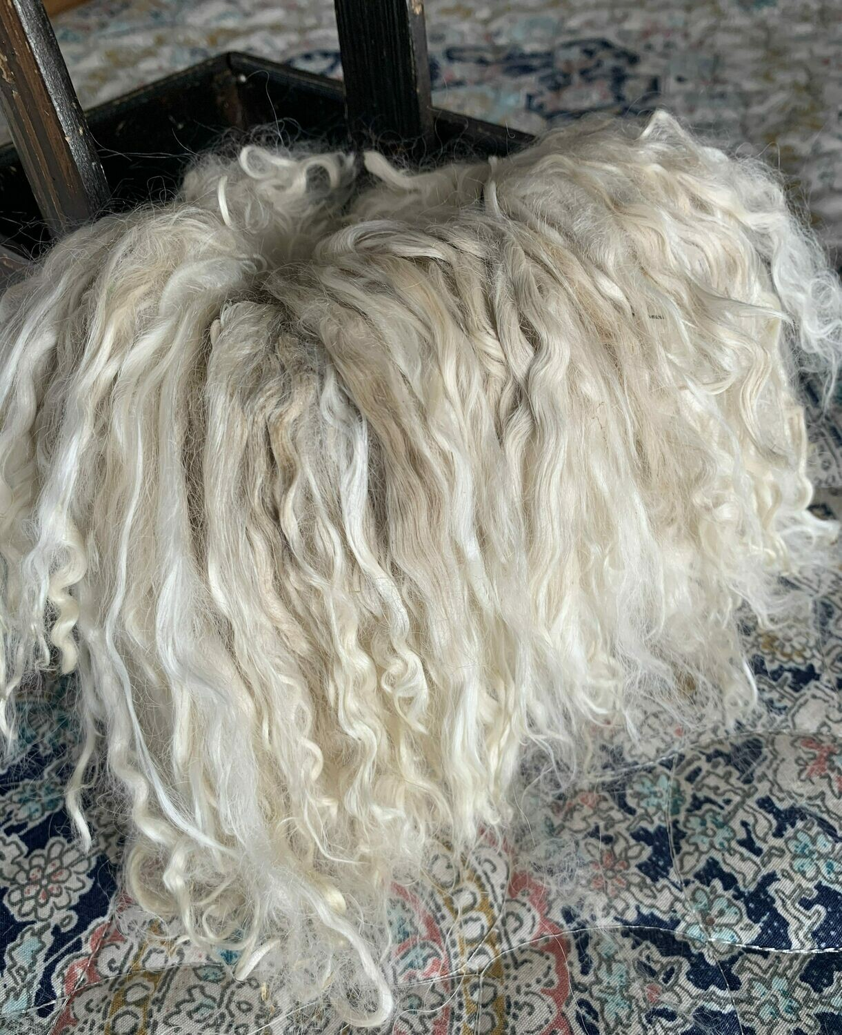 Suri Alpaca Locks, 7 Inches, White, Beluga