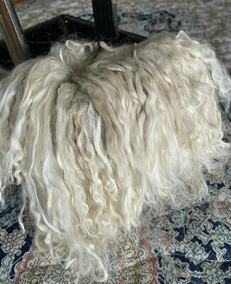 Suri Alpaca Locks, 7 Inches, White, Beluga