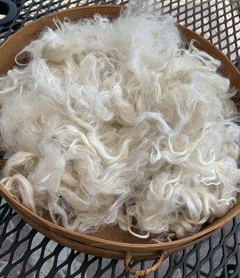Suri Alpaca Fiber, 6 Inches, White,