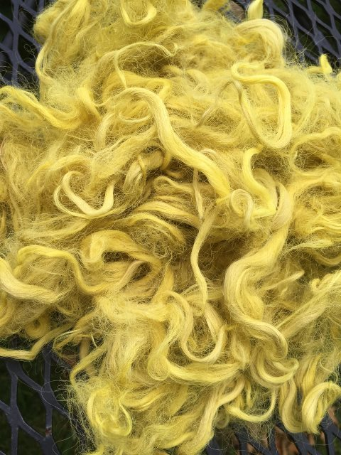 Hand-Dyed Suri Alpaca Fiber, 4 Inches, Daisy