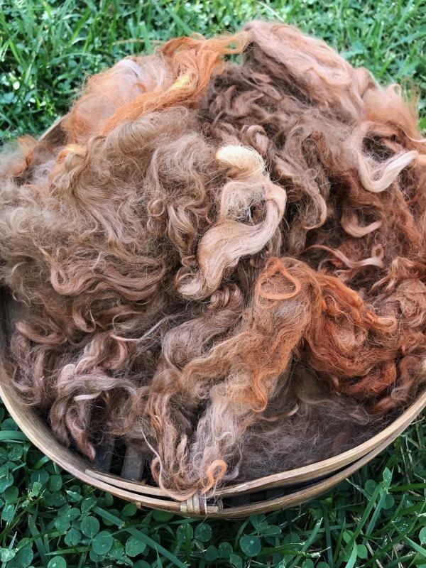 Suri Alpaca Fiber, 4 Inches, Madder Orange over Fawn