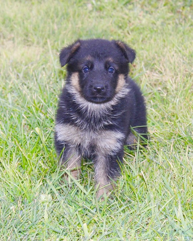 Puppy Purchase including Maine Sales Tax