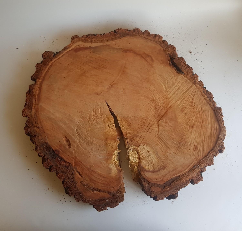 Large Wood Stump