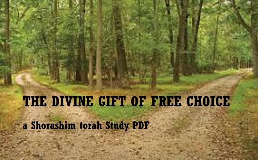 The Divine Gift of Free Choice ( a Torah study PDF)
