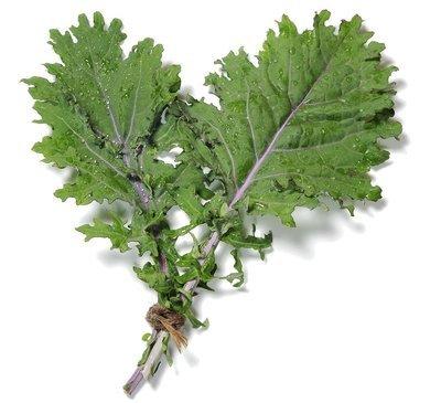 紅俄羅斯羽衣甘藍 / Red Russian Kale (150 g)