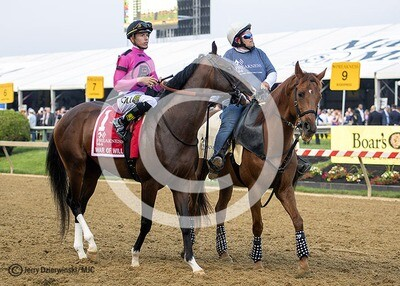 Preakness Post Parade. War of Will