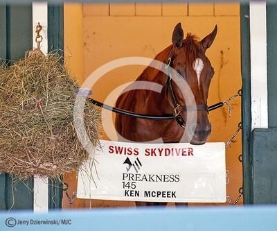 Swiss Skydiver