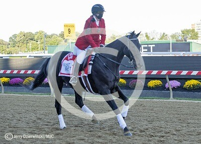 Preakness Outrider
