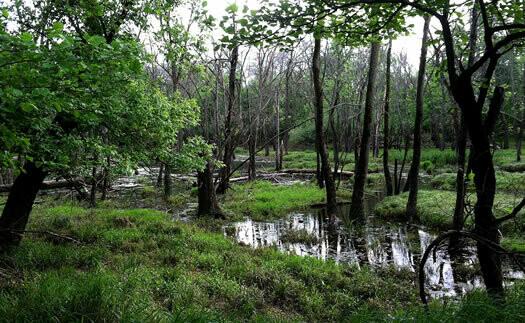 Forest Preserve Walking Tour