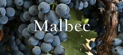 Malbec 596 on 1103P