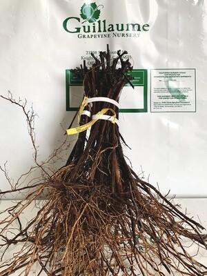 Root Stock 420A 'Millardet et de Grasset'