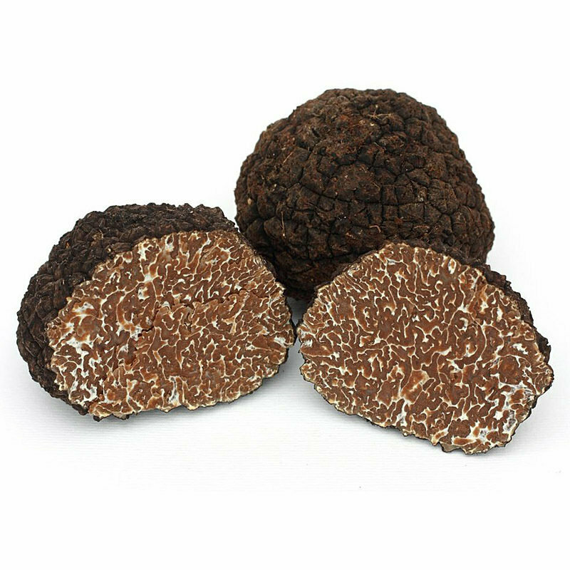 Fresh Autumn Black Truffle | Tuber Uncinatum Chatin | 1 pcs (+15g)