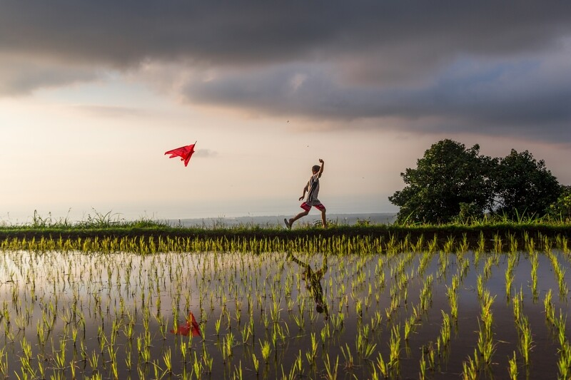 Kite session in rice fields