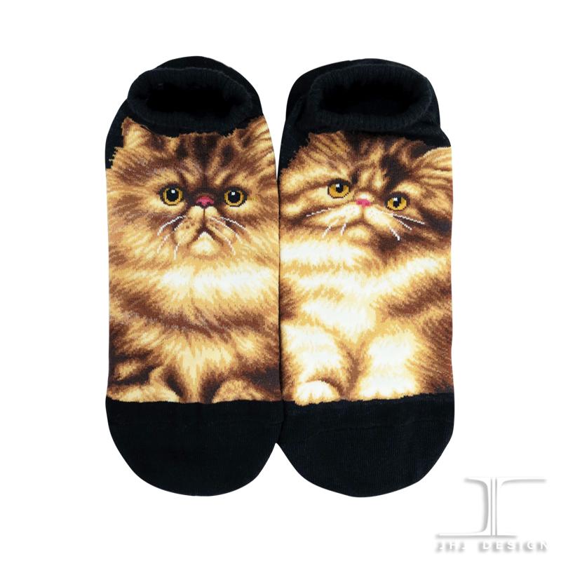 Cats - Persian