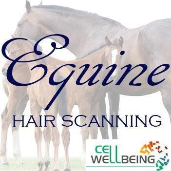 Equine Hair Scanning (100kms of Coolum Beach Qld.4573)
