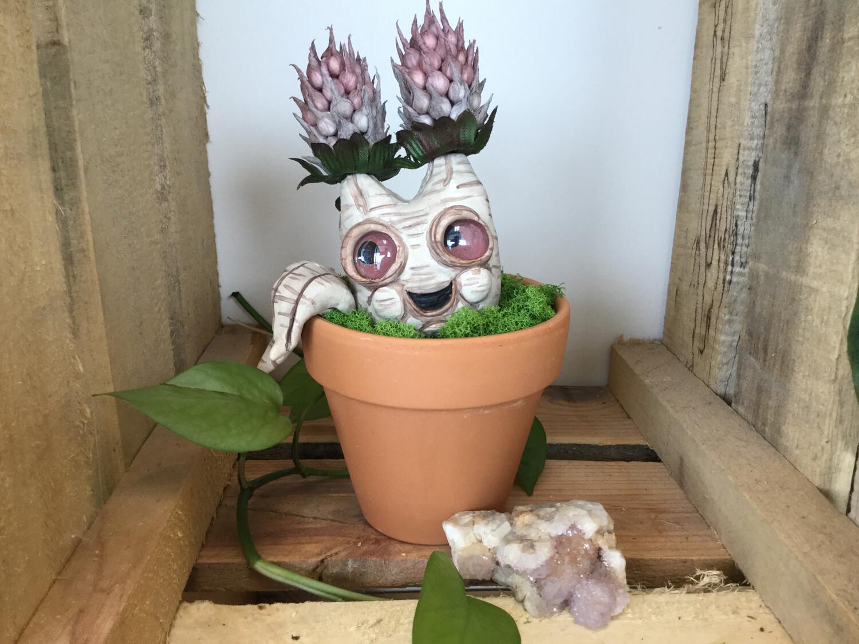 Large Plant Baby - Gossip