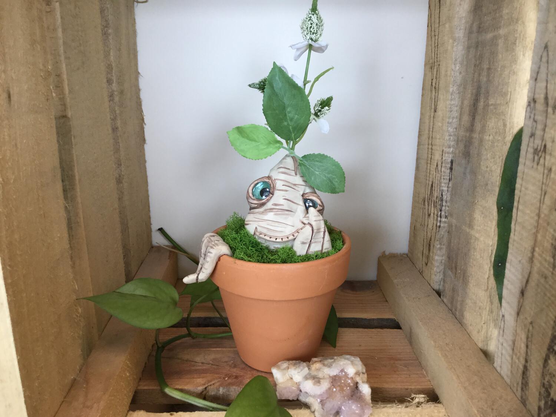 Large Plant Baby - Bashful