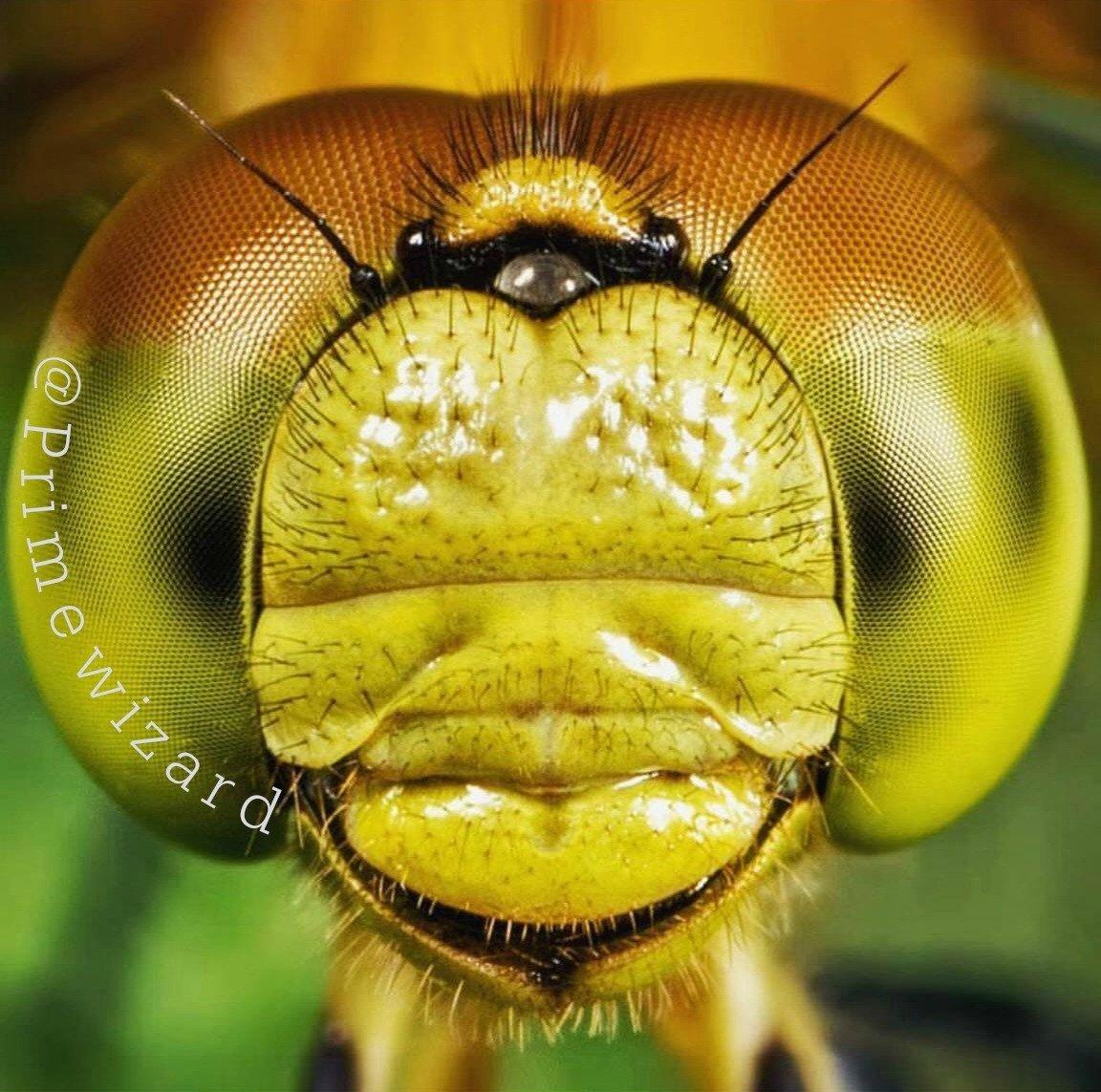 Dragonfly Eye Macro
