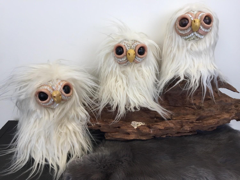 Ivory Owlet