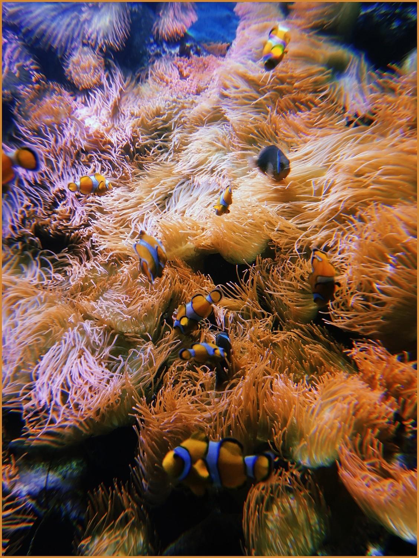 Under the sea... // ab //