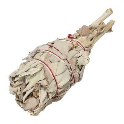 White Sage 鼠尾草 (火炬型)
