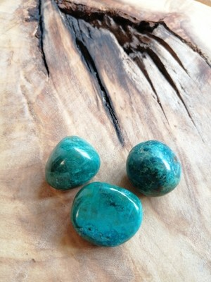 Chrysocolle grande roulée