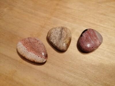 Bois fossilisé plat