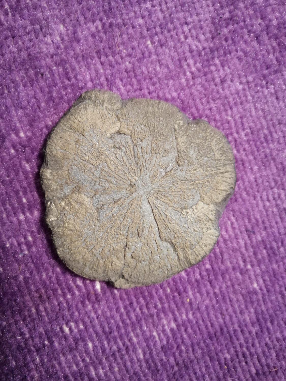 Pyrite Soleil (dollar)